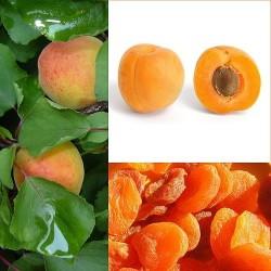 Parfum Abricot