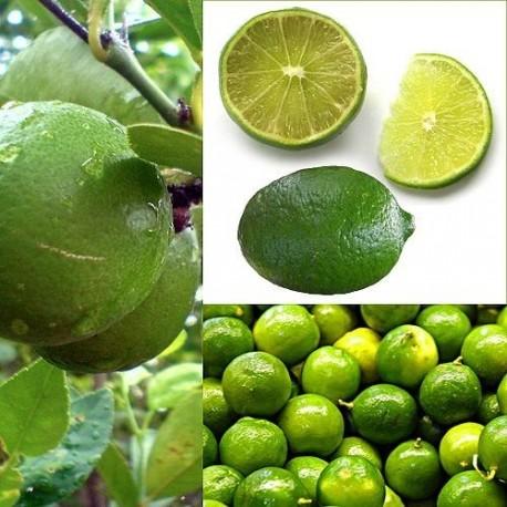 Parfum Citron Vert