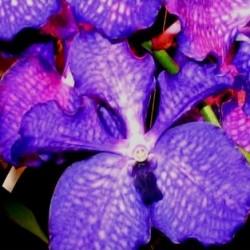 Parfum Orchidée