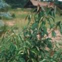 Huile essentielle Ravintsara (rameaux) BIO