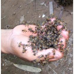 Anti varroa