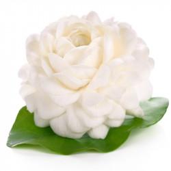 Huile essentielle jasmin sambac (absolue) Dromessence