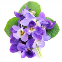 Huile essentielle Violette (absolue) Dromessence