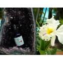 L'elixir d'orchidées