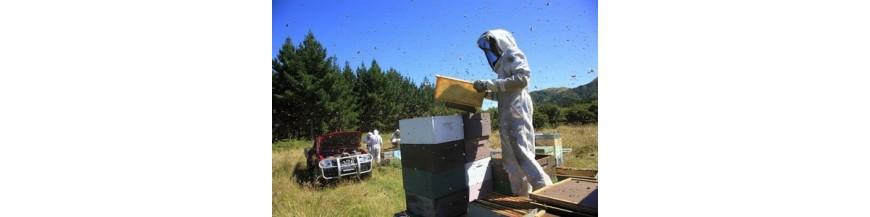 Traitement des ruches